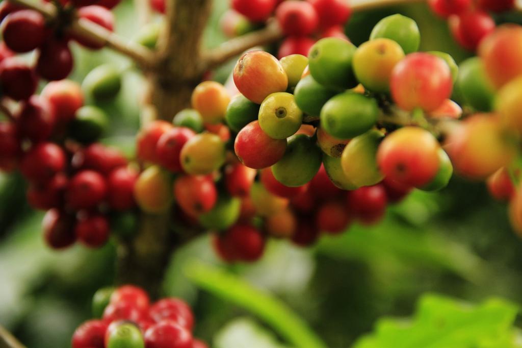 coffee-grains-1474601_1280.jpg